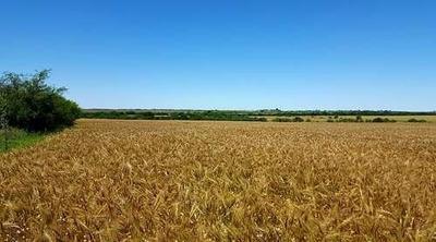 Campo Granja-agrícola En Nogoyá 140has - 15km De La Ciudad.